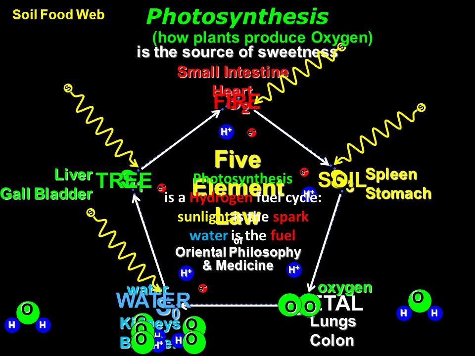 Pentagram Philadelphia PHI diagonal OD AC Pythagorean Mystery Schools GREATER BD ODOC side AB BO LESSER Phi-ladel-phi-a GREATER = B DE AC = 1.618… = O AC AO = = = 1.6180339… AO WHOLE Phi-la-delphi-a PHI PHI regeneration cascade of PHI-ratio scales Fractal Nest irrational number irrational number = Extreme & Mean Ratio = Five-sided Symmetry Five-sided Symmetry F our D irections material world SQUARE CIRCLE spiritual world O riginal M ystery 5 = The Davinci Code = The Golden Mean = The Divine Ratio = The Divine Feminine how to fit soul inside biology Embodiment Vesica Sacred Geometry