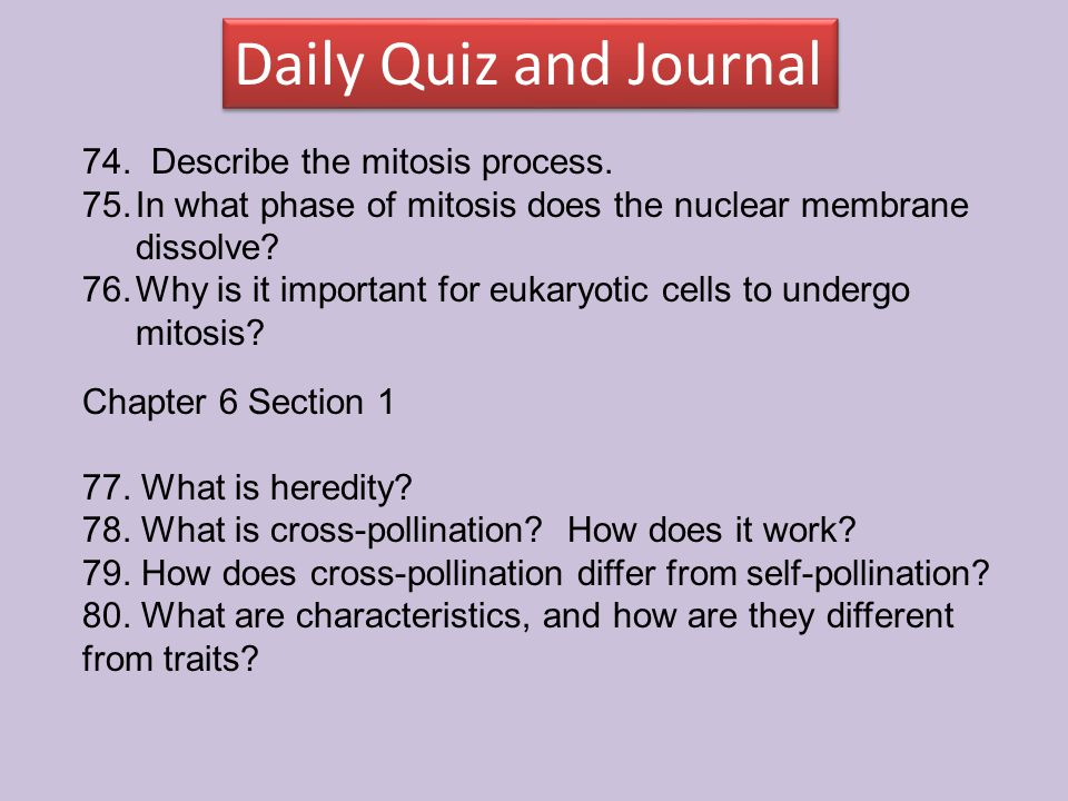 74. Describe the mitosis process. 75.In what phase of mitosis does the nuclear membrane dissolve? 76.Why is it important for eukaryotic cells to under