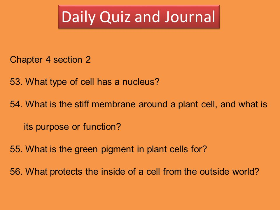Daily Quiz and Journal Chapter 4 section 2 53. What type of cell has a nucleus? 54. What is the stiff membrane around a plant cell, and what is its pu