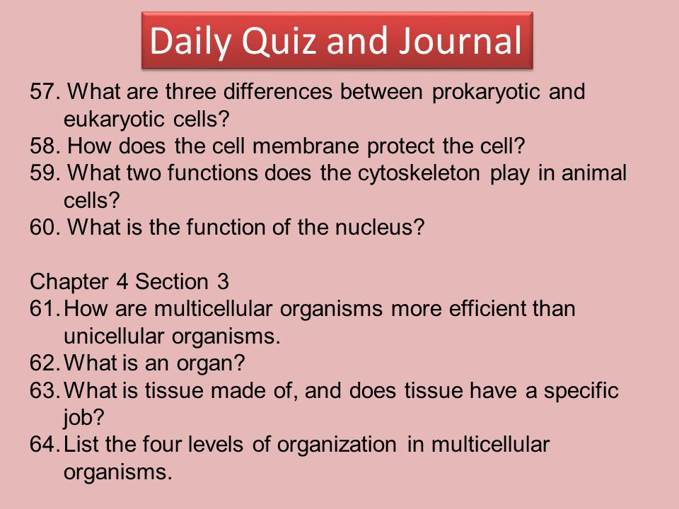 Daily Quiz and Journal 57. What are three differences between prokaryotic and eukaryotic cells? 58. How does the cell membrane protect the cell? 59. W