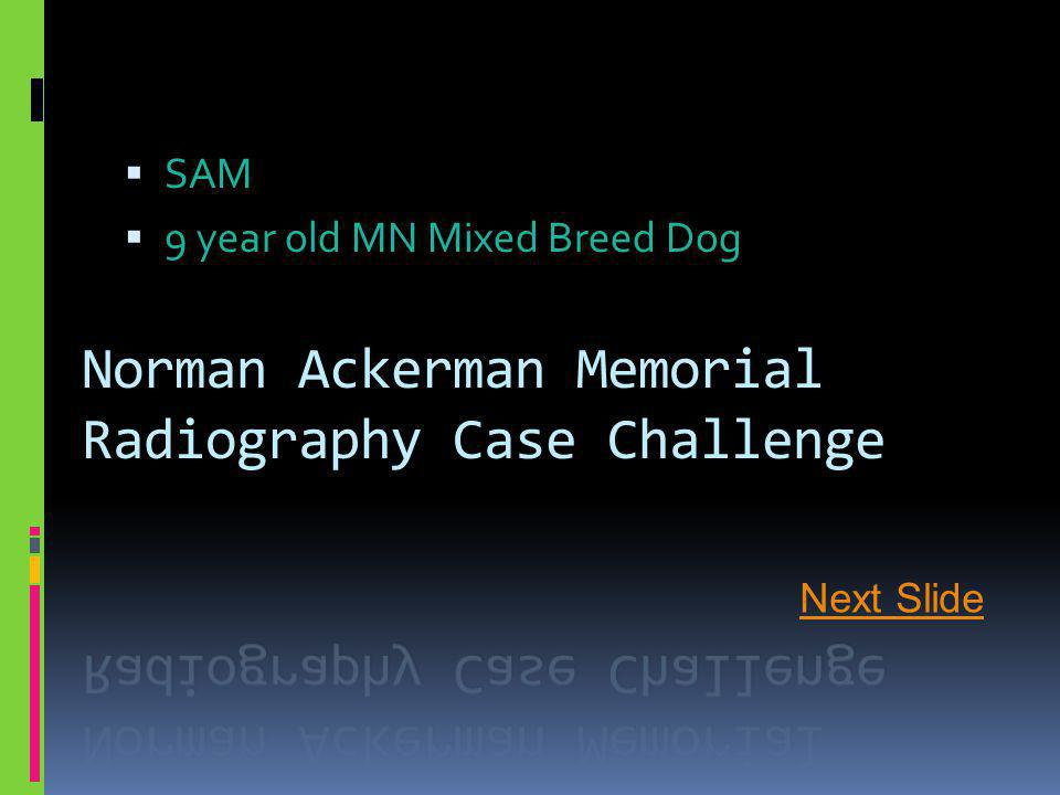  SAM  9 year old MN Mixed Breed Dog Next Slide