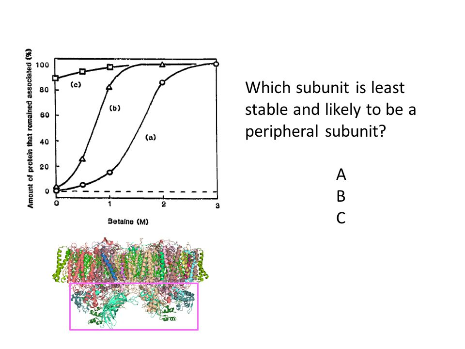 Which subunit is least stable and likely to be a peripheral subunit? A B C