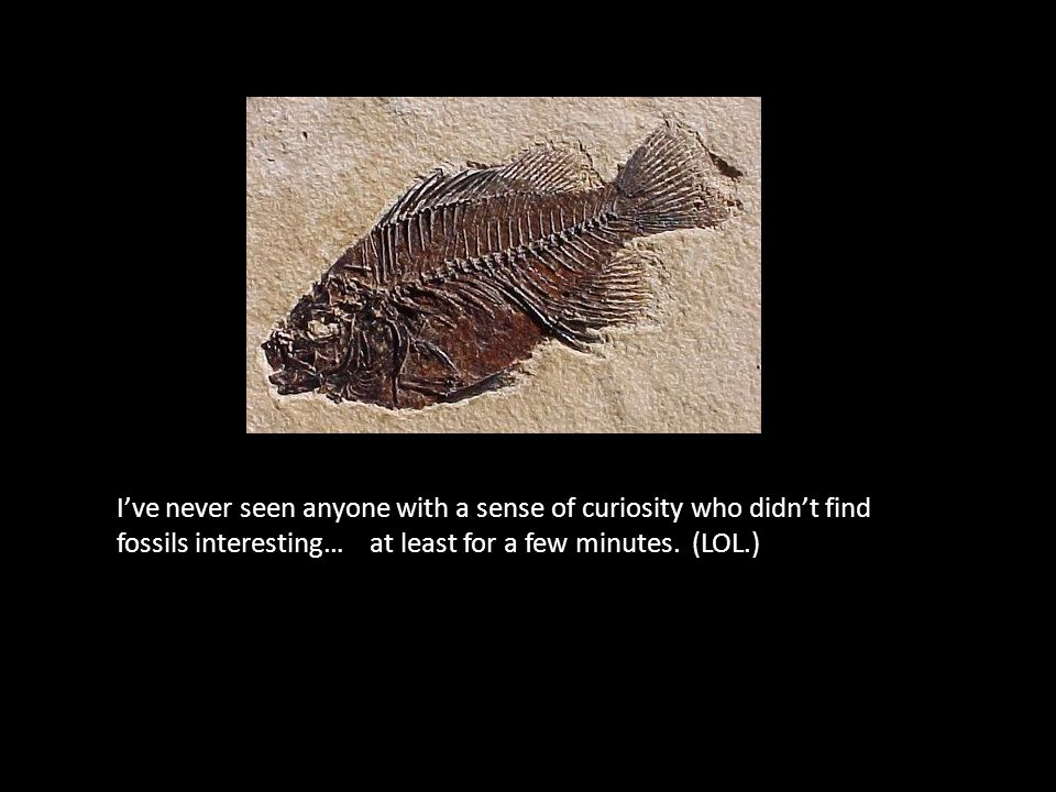 I've never seen anyone with a sense of curiosity who didn't find fossils interesting… at least for a few minutes. (LOL.)