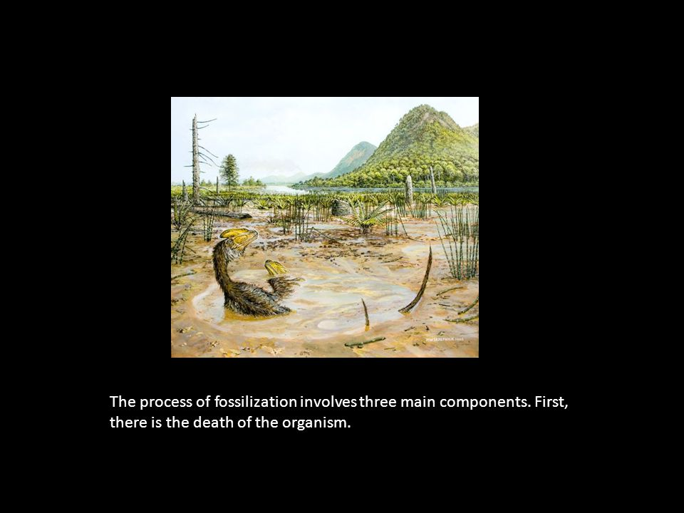 The process of fossilization involves three main components. First, there is the death of the organism.