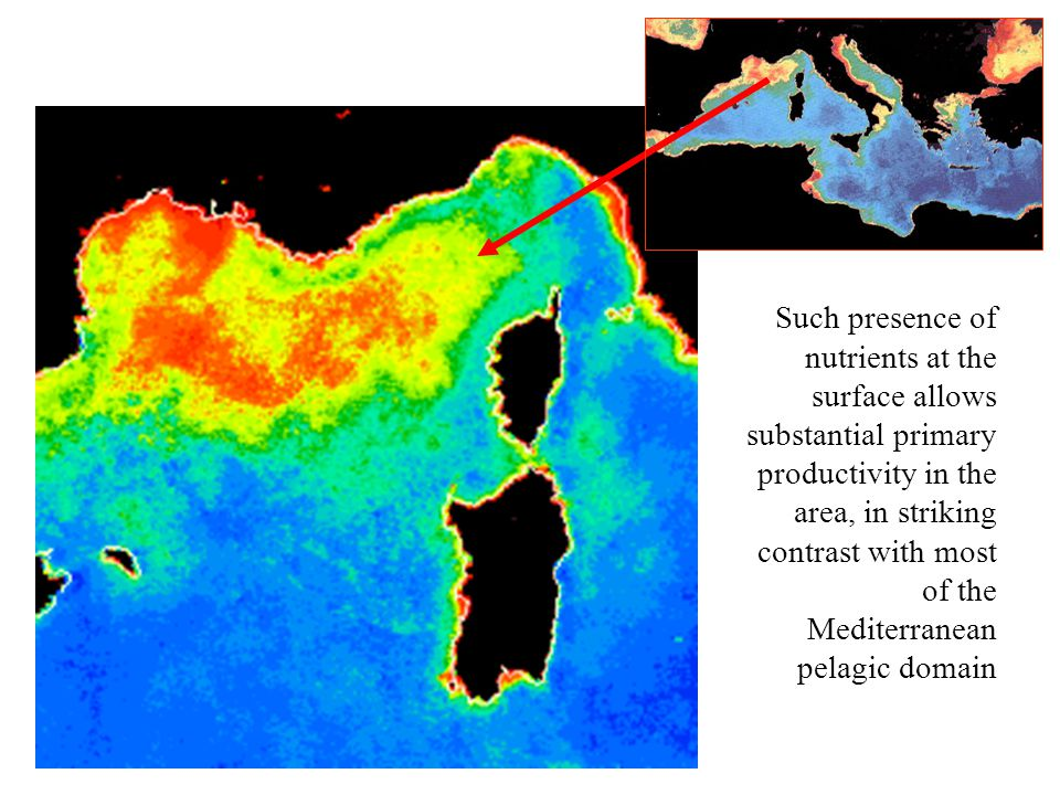 Such presence of nutrients at the surface allows substantial primary productivity in the area, in striking contrast with most of the Mediterranean pelagic domain