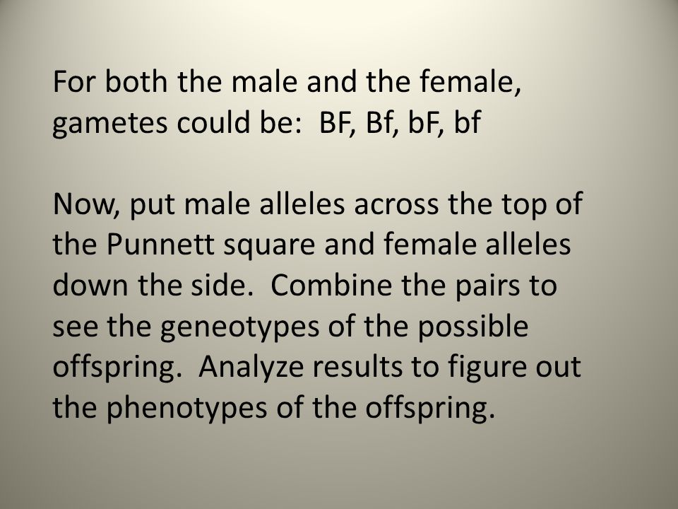 For both the male and the female, gametes could be: BF, Bf, bF, bf Now, put male alleles across the top of the Punnett square and female alleles down