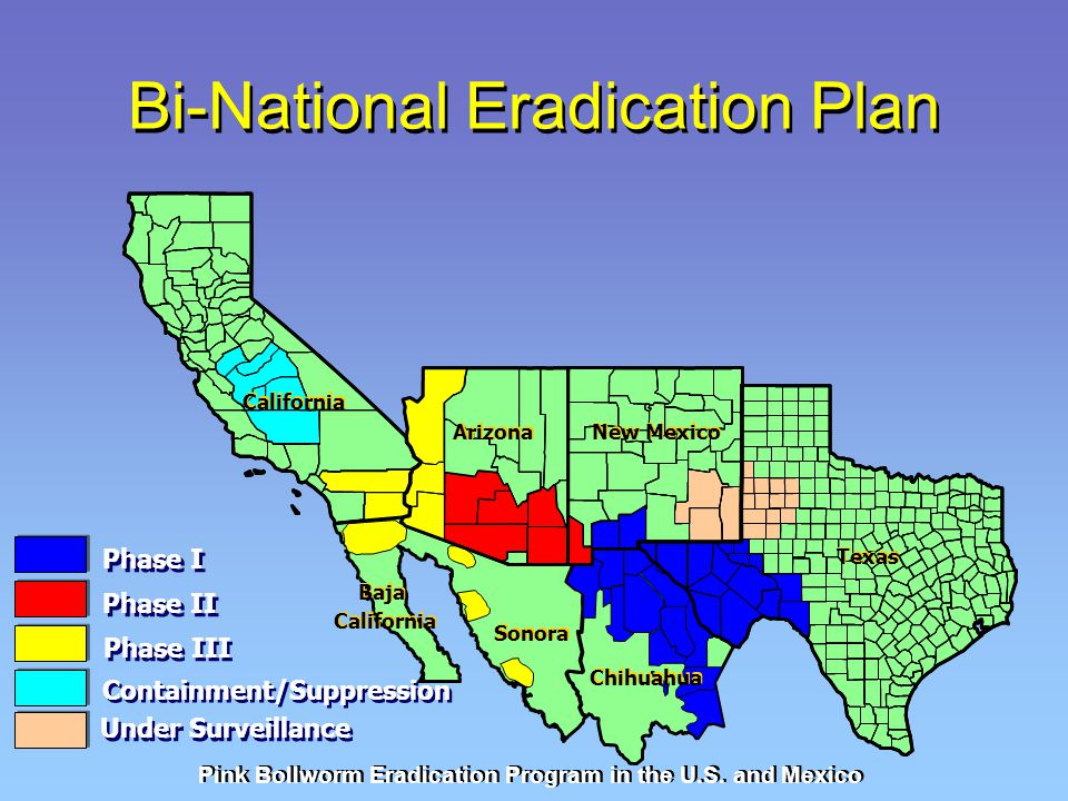 Bi-National Eradication Plan Pink Bollworm Eradication Program in the U.S. and Mexico Phase I Phase II Phase III Containment/Suppression Under Surveil