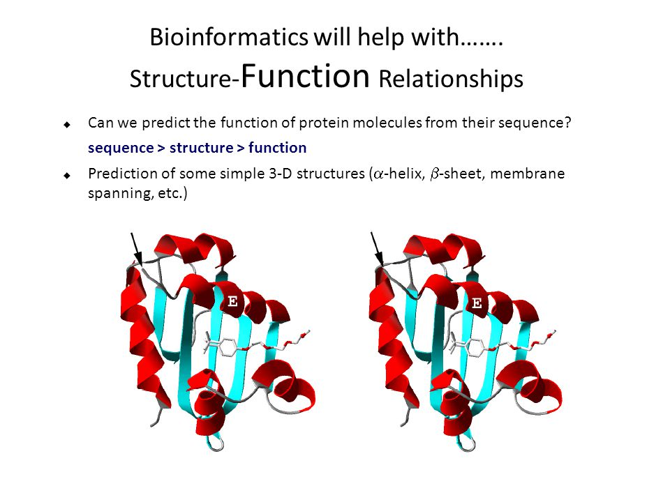 Bioinformatics will help with…….