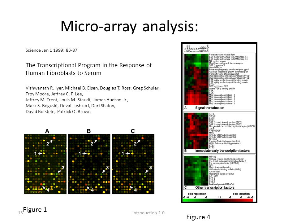 13Introduction 1.0 Micro-array analysis: Figure 4 Figure 1 Science Jan 1 1999: 83-87 The Transcriptional Program in the Response of Human Fibroblasts to Serum Vishwanath R.
