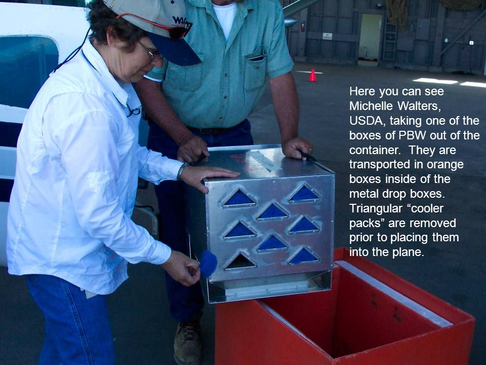 Here you can see Michelle Walters, USDA, taking one of the boxes of PBW out of the container.