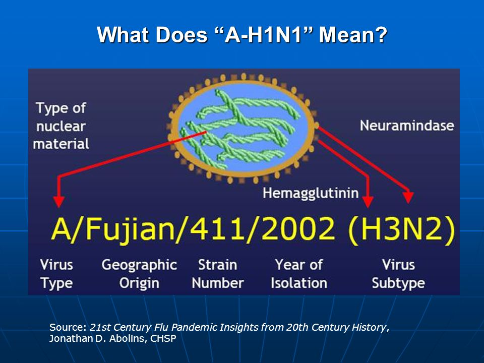 An A-H1N1 Virus (37,800x) Source: Centers for Disease Control & Prevention (CDC).