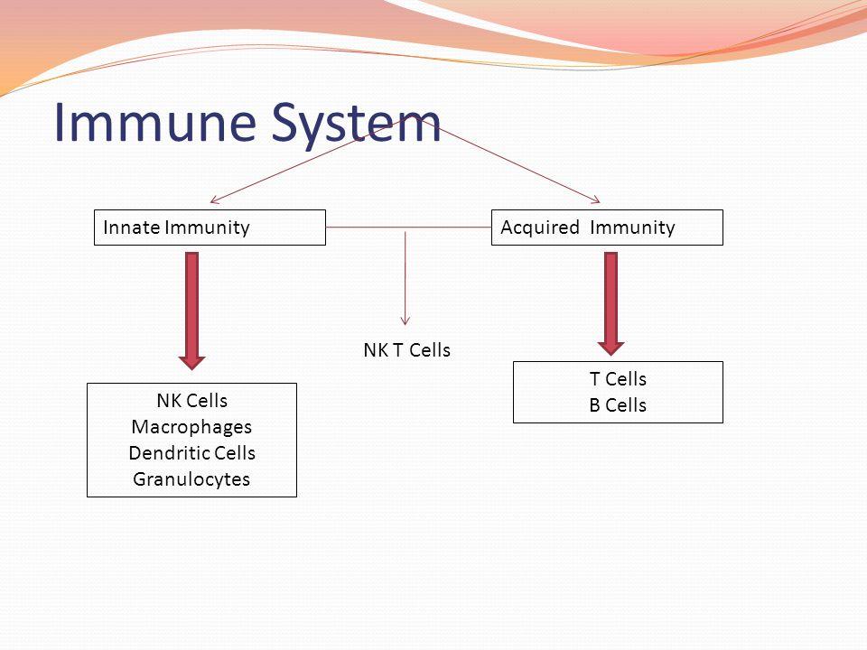 Immune System Innate ImmunityAcquired Immunity NK Cells Macrophages Dendritic Cells Granulocytes T Cells B Cells NK T Cells