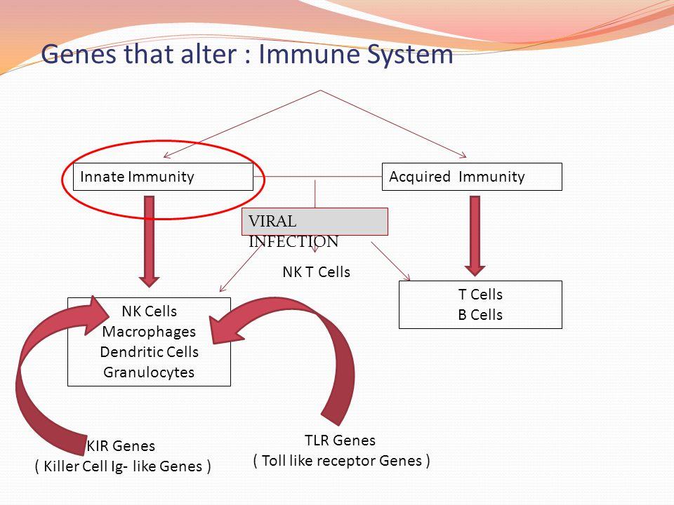 Genes that alter : Immune System Innate ImmunityAcquired Immunity NK Cells Macrophages Dendritic Cells Granulocytes T Cells B Cells NK T Cells KIR Gen