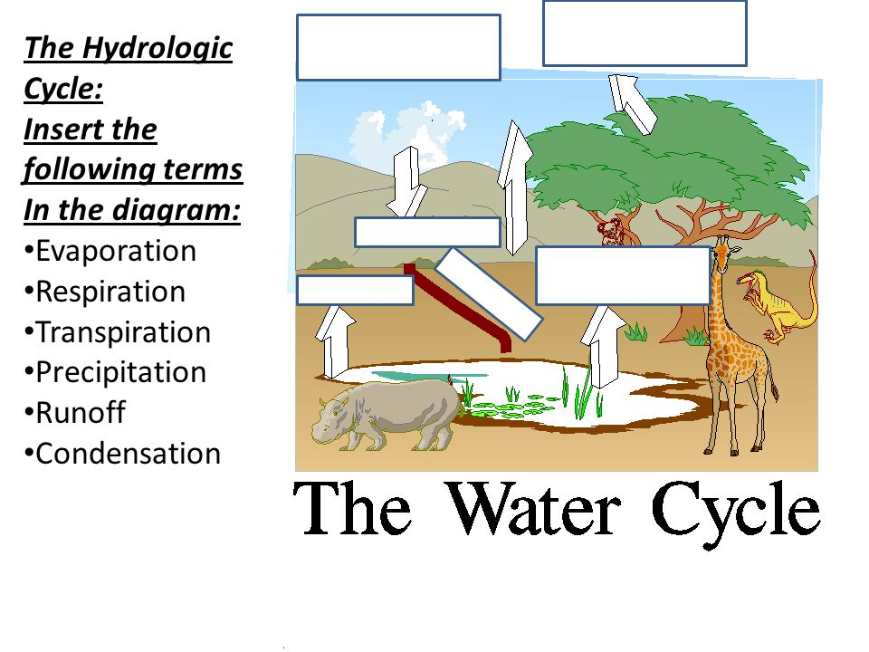 2011.GUGS103 The Hydrologic Cycle: Insert the following terms In the diagram: Evaporation Respiration Transpiration Precipitation Runoff Condensation