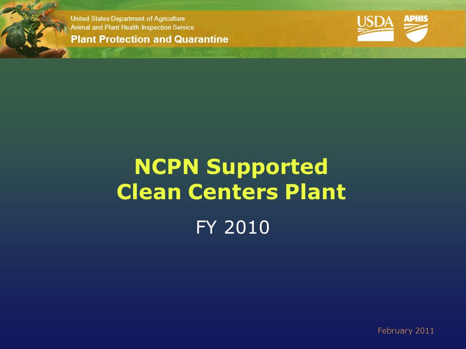 United States Department of Agriculture Animal and Plant Health Inspection Service Plant Protection and Quarantine NCPN Supported Clean Centers Plant