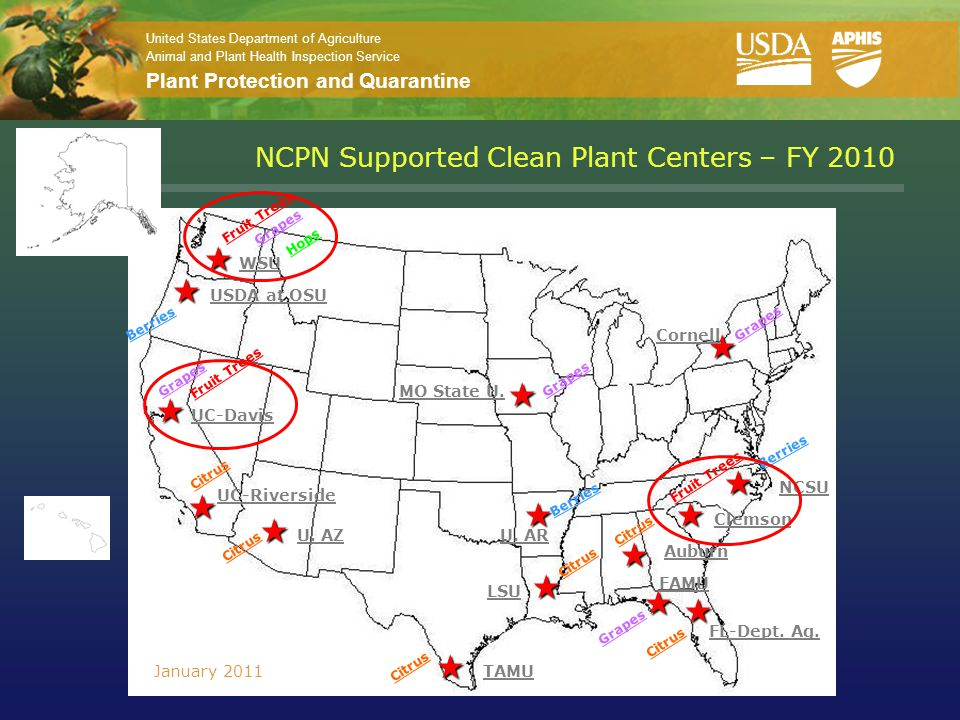 United States Department of Agriculture Animal and Plant Health Inspection Service Plant Protection and Quarantine NCPN Supported Clean Plant Centers – FY 2010     TAMU Fruit Trees Hops Grapes USDA at OSU Berries UC-Davis Fruit Trees Grapes UC-Riverside Citrus  U.