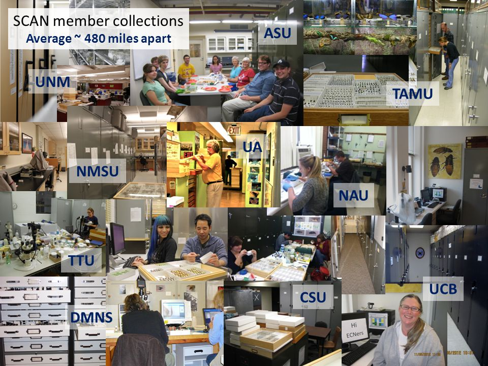 UNM TAMU ASU DMNS UCB NMSU CSU TTU NAU UA SCAN member collections Average ~ 480 miles apart