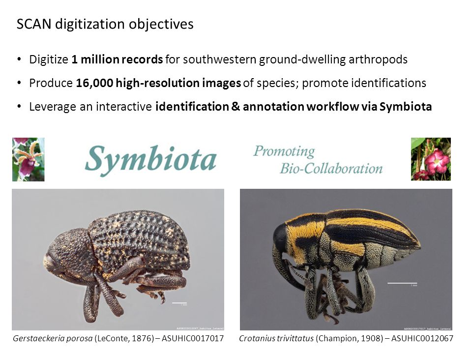 SCAN digitization objectives Digitize 1 million records for southwestern ground-dwelling arthropods Produce 16,000 high-resolution images of species;