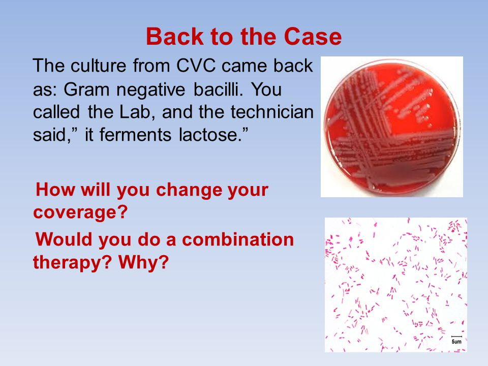 Back to the Case The culture from CVC came back as: Gram negative bacilli.