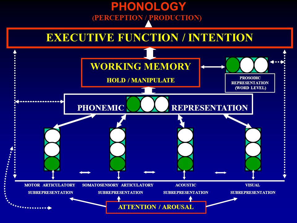 PHONOLOGY EXECUTIVE FUNCTION / INTENTION WORKING MEMORY HOLD / MANIPULATE ( PERCEPTION / PRODUCTION) ATTENTION / AROUSAL ACOUSTIC SUBREPRESENTATION VISUAL SUBREPRESENTATION MOTOR ARTICULATORY SUBREPRESENTATION SOMATOSENSORY ARTICULATORY SUBREPRESENTATION PHONEMICREPRESENTATION PROSODIC REPRESENTATION (WORD LEVEL)