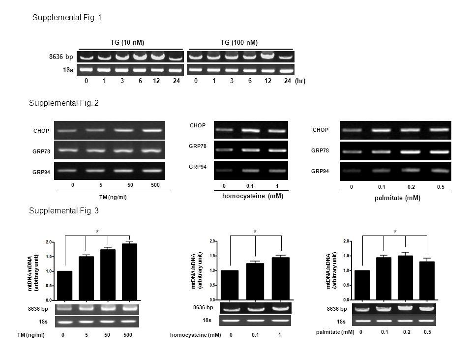 8636 bp 18s TG (10 nM) 0 1 3 6 12 24 TG (100 nM) 0 1 3 6 12 24 (hr) Supplemental Fig. 1 Supplemental Fig. 2 CHOP GRP78 GRP94 CHOP GRP78 GRP94 homocyst