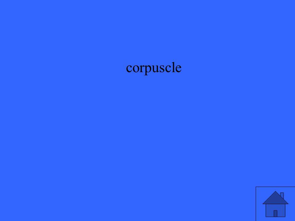 corpuscle