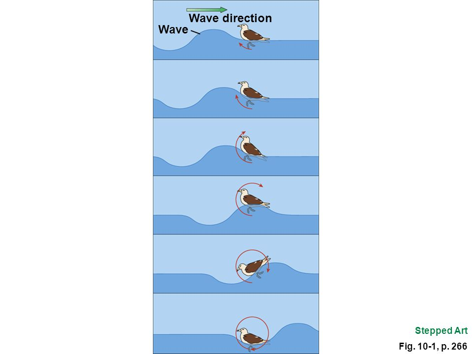 Fig. 10-1, p. 266 Wave direction Wave Stepped Art