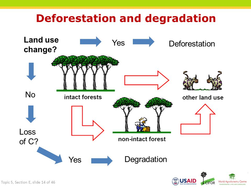 Deforestation and degradation Land use change? Yes No Deforestation Degradation Loss of C? Yes Topic 5, Section E, slide 14 of 46