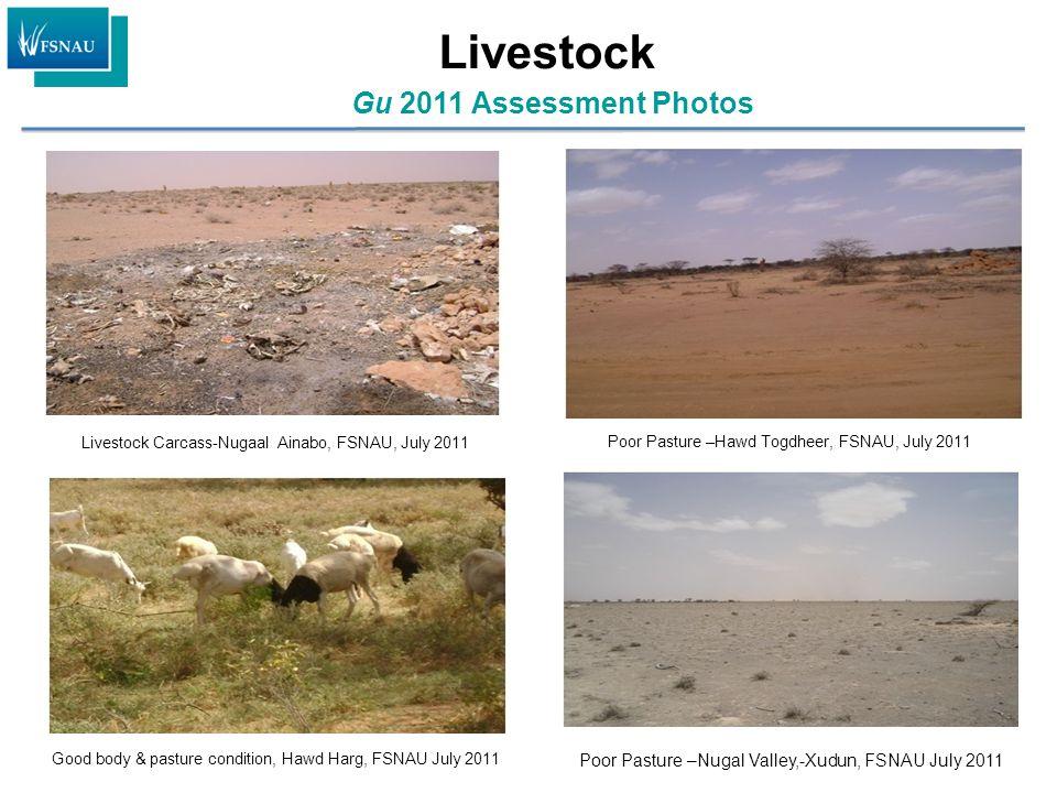 Gu 2011 Assessment Photos Livestock Livestock Carcass-Nugaal Ainabo, FSNAU, July 2011 Poor Pasture –Hawd Togdheer, FSNAU, July 2011 Good body & pastur