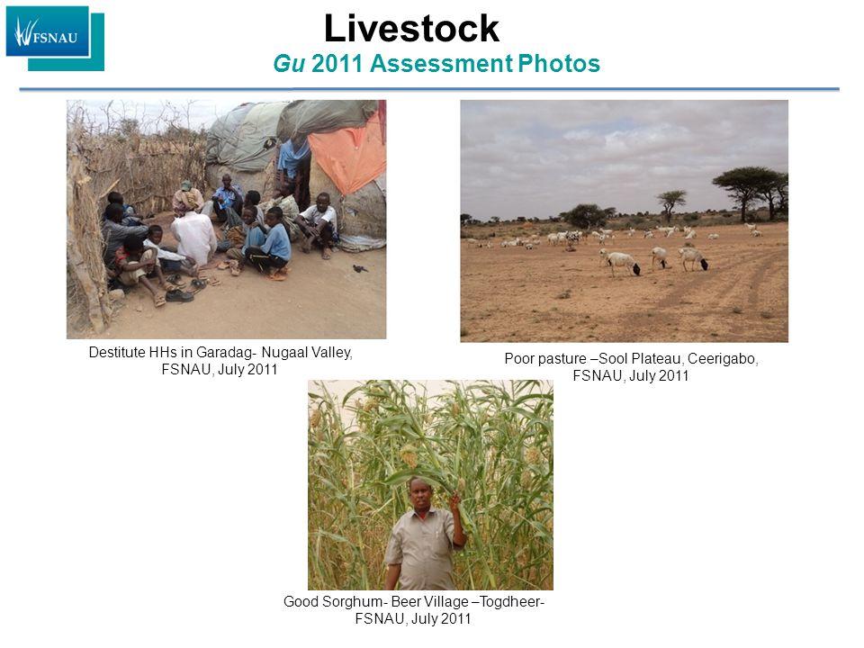 Gu 2011 Assessment Photos Good Sorghum- Beer Village –Togdheer- FSNAU, July 2011 Destitute HHs in Garadag- Nugaal Valley, FSNAU, July 2011 Poor pastur
