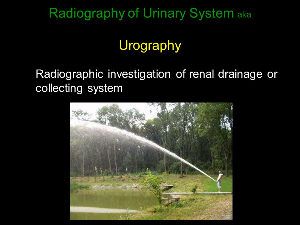 Radiography of Urinary System aka Urography Radiographic investigation of renal drainage or collecting system