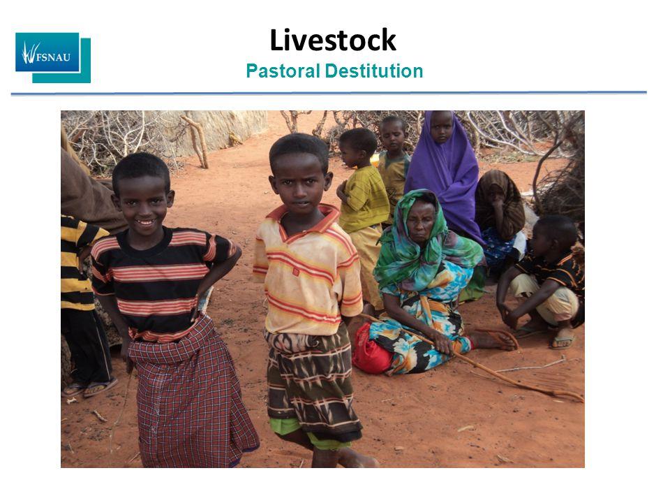 Livestock Pastoral Destitution