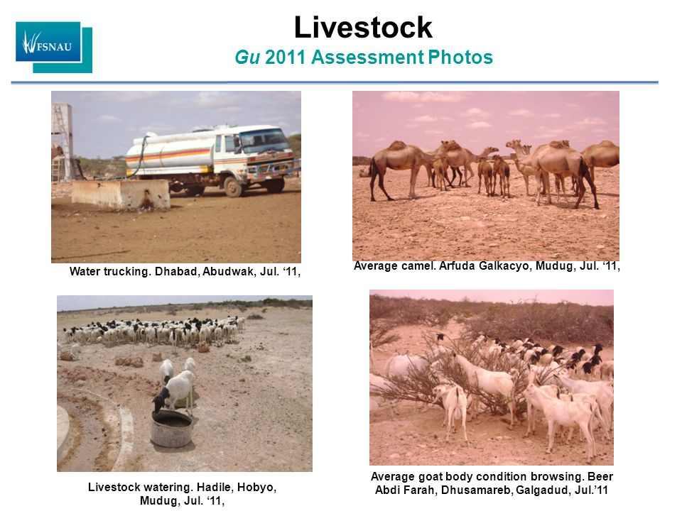 Livestock Gu 2011 Assessment Photos Water trucking.