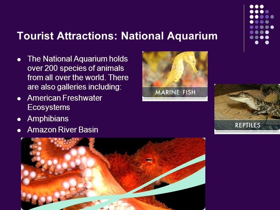 Tourist Attractions: National Aquarium The National Aquarium holds over 200 species of animals from all over the world. There are also galleries inclu
