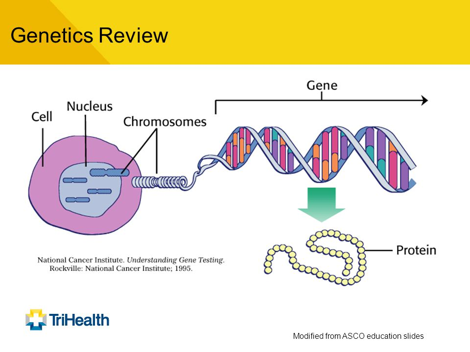 Gene mutations cause cancer A mutation is a change in the normal base pair sequence that affects the function of that gene's protein Many types of genes are important in the development of cancer including tumor suppressor genes, mismatch repair genes and oncogenes