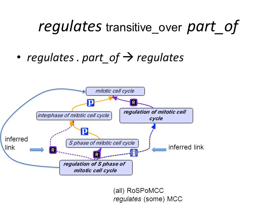 regulates transitive_over part_of regulates.