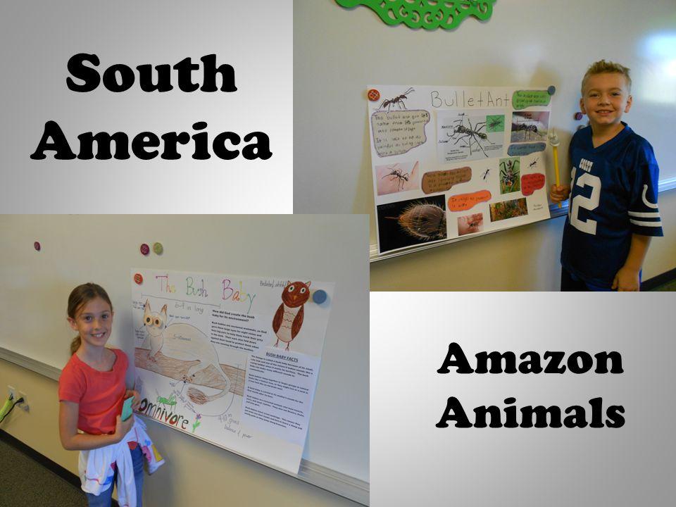South America Amazon Animals