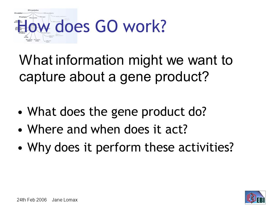 24th Feb 2006 Jane Lomax How does GO work. What does the gene product do.