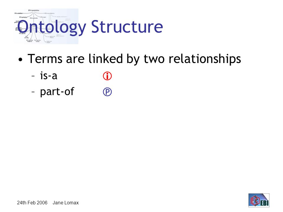 24th Feb 2006 Jane Lomax Ontology Structure Terms are linked by two relationships –is-a  –part-of 