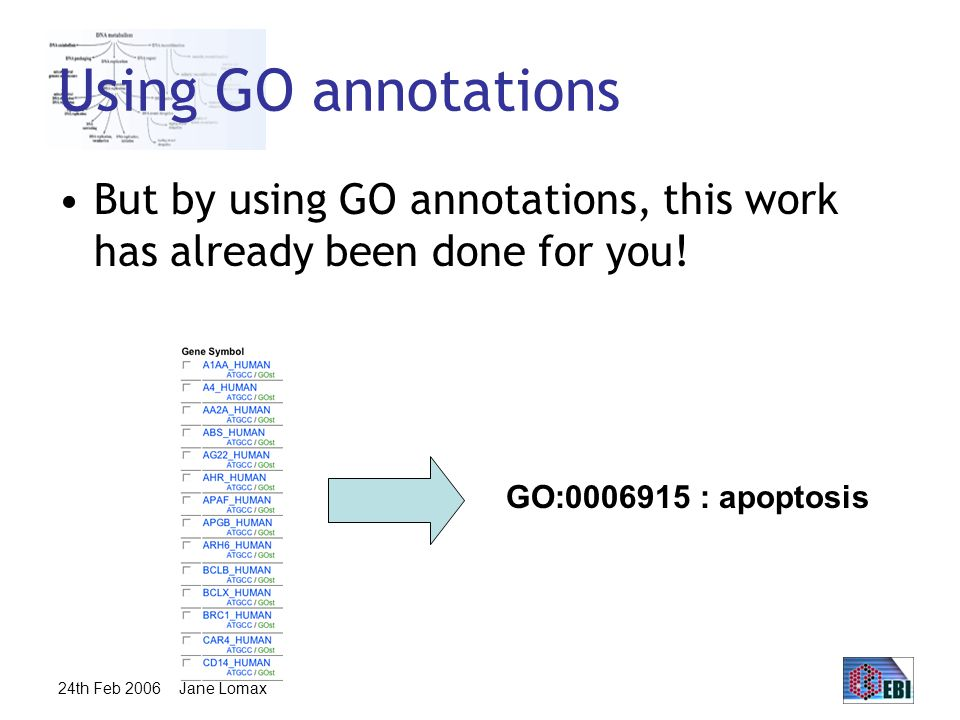 24th Feb 2006 Jane Lomax Using GO annotations But by using GO annotations, this work has already been done for you.