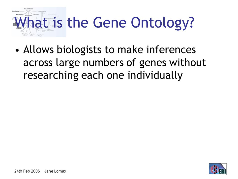 24th Feb 2006 Jane Lomax What is the Gene Ontology.