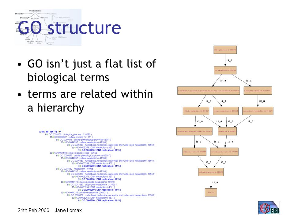 24th Feb 2006 Jane Lomax Ontology Structure Ontologies are structured as a hierarchical directed acyclic graph (DAG) Terms can have more than one parent and zero, one or more children