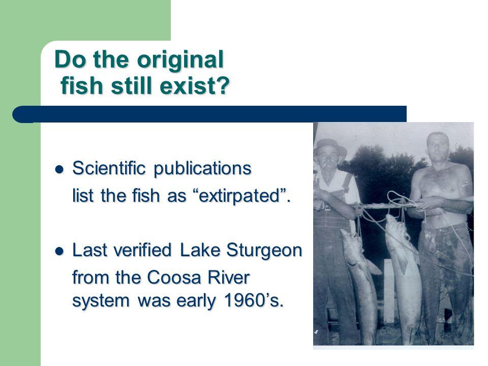 "Do the original fish still exist? Scientific publications Scientific publications list the fish as ""extirpated"". Last verified Lake Sturgeon Last veri"