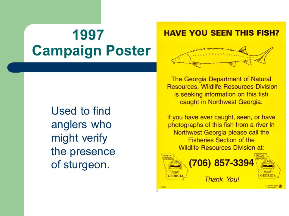 1997 Campaign Poster Used to find anglers who might verify the presence of sturgeon.