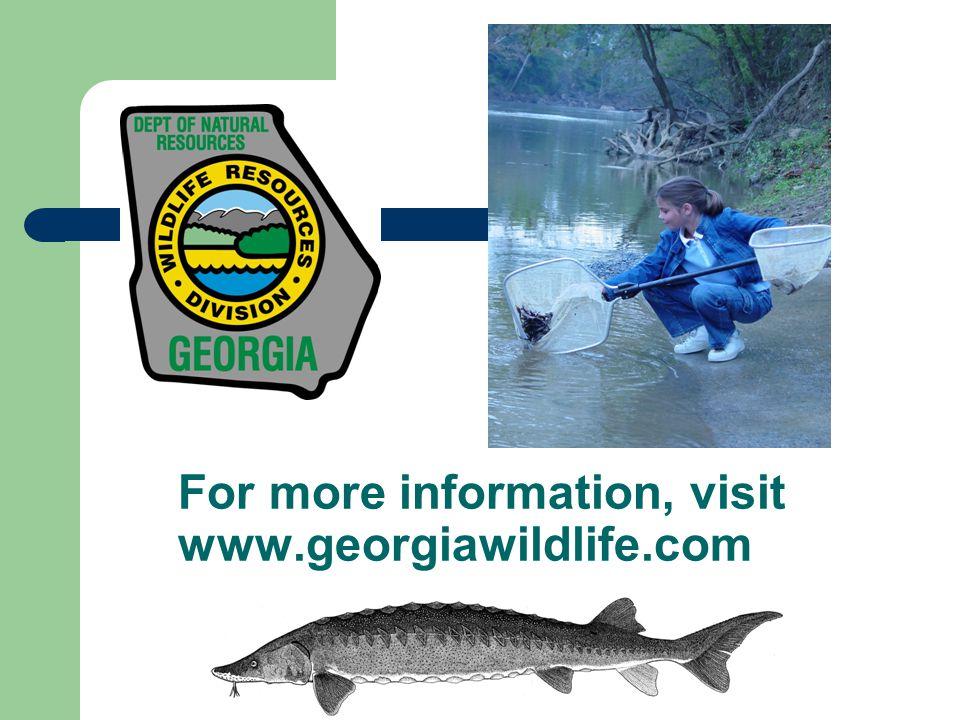 For more information, visit www.georgiawildlife.com
