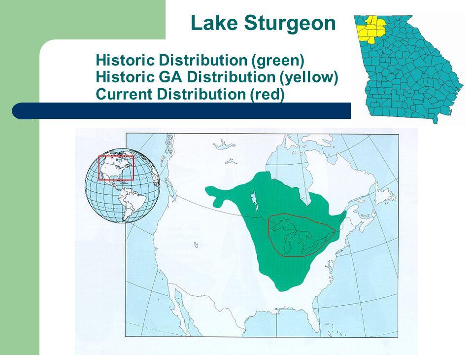 Lake Sturgeon Historic Distribution (green) Historic GA Distribution (yellow) Current Distribution (red)