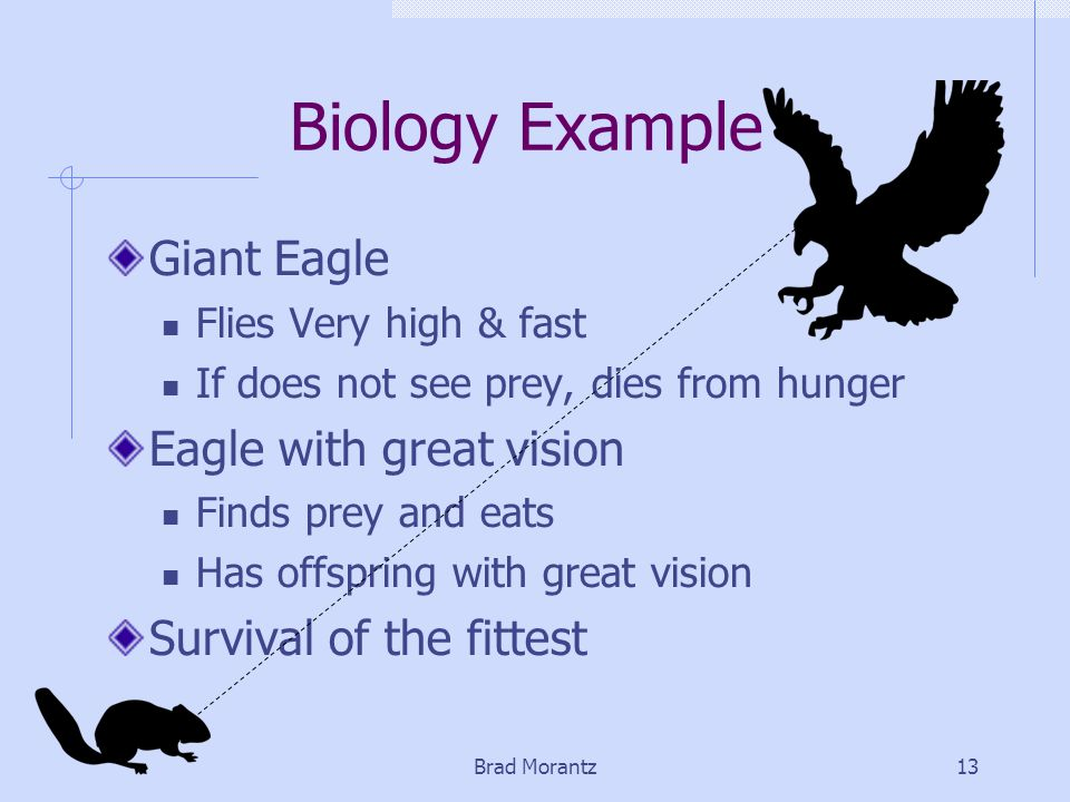 Brad Morantz13 Biology Example Giant Eagle Flies Very high & fast If does not see prey, dies from hunger Eagle with great vision Finds prey and eats Has offspring with great vision Survival of the fittest