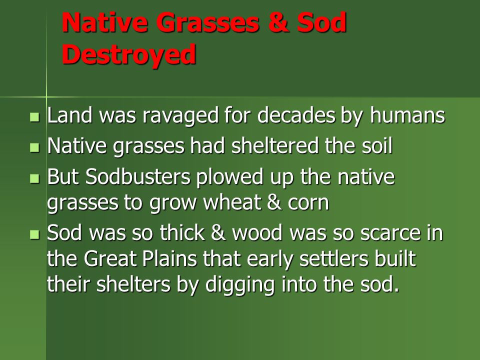 Native Grasses & Sod Destroyed Land was ravaged for decades by humans Land was ravaged for decades by humans Native grasses had sheltered the soil Native grasses had sheltered the soil But Sodbusters plowed up the native grasses to grow wheat & corn But Sodbusters plowed up the native grasses to grow wheat & corn Sod was so thick & wood was so scarce in the Great Plains that early settlers built their shelters by digging into the sod.