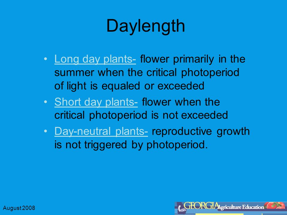 August 2008 Daylength Long day plants- flower primarily in the summer when the critical photoperiod of light is equaled or exceeded Short day plants-