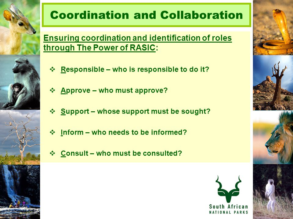 Coordination and Collaboration Ensuring coordination and identification of roles through The Power of RASIC:  Responsible – who is responsible to do it.